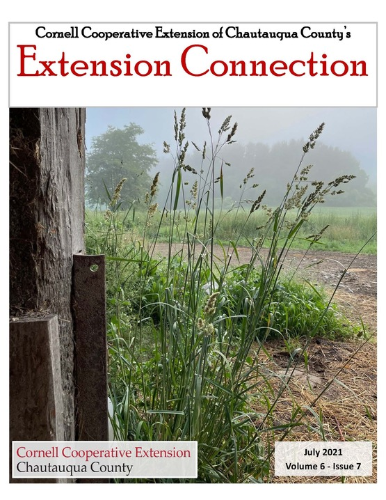 Extension Connection July 2021