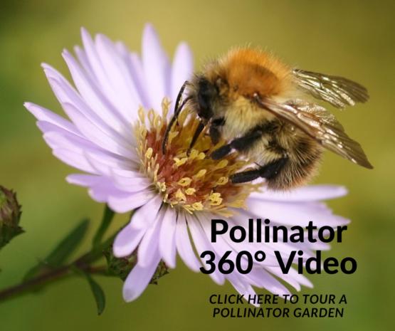 Pollinator 360 Video
