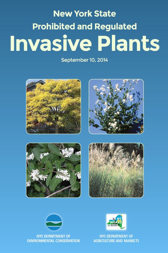 DEC Invasive Plants List