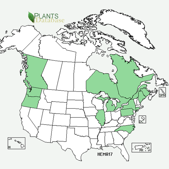 Locations of Giant hogweed on the USDA Plants Database map.