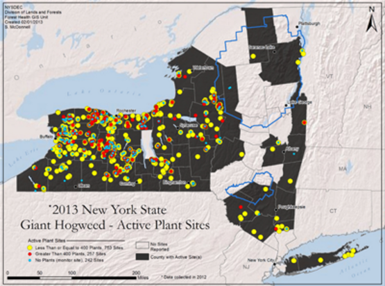 Map of Giant hogweed locations in NY State (2013) from the NY State Department of Environmental Conservation (DEC).