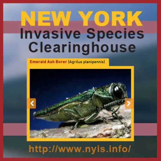 Visit the NY Invasive Species Clearinghouse website