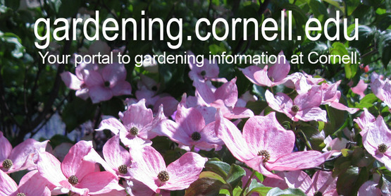 Remake of Cornell Garden Based Learning image, 850x425, to link to their website at: http://www.gardening.cornell.edu/