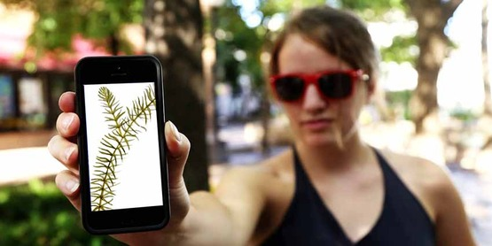 woman with phone and photo of hydrilla