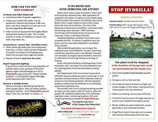 Stop Hydrilla brochure pg. 1