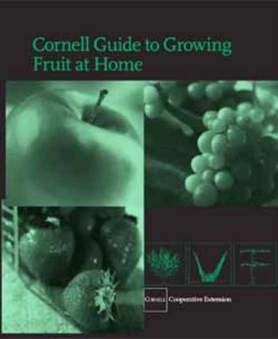 """cover of the publication """"Cornell Guide Growing Fruit at Home"""" from Cornell"""