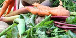 Organic vegetables 1575584