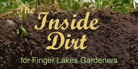 graphic for Inside Dirt