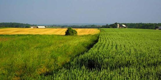 Farmland850x425
