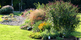 Xeriscape garden at suny ulster