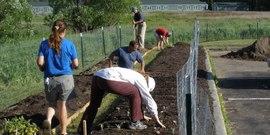 Schuyler gardening15