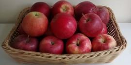Basket of Fuji apples