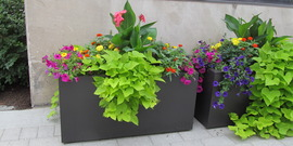 Commons planters