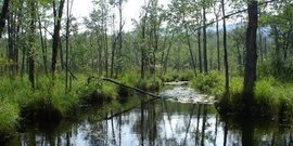 Thompson Pond Bog