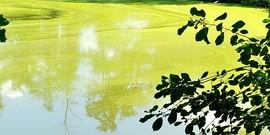 blue-green algae bloom at Stewart Park pond July 2020