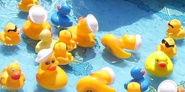 rubber ducks in a kiddie pool, 4-H Duck Race, Tompkins County