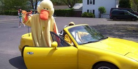 Mama Duck arrives at the 4-H Duck Race in style, Tompkins County NY