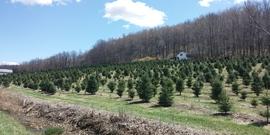 Abel's Tree Farm