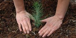 Planting tree usfs850x425