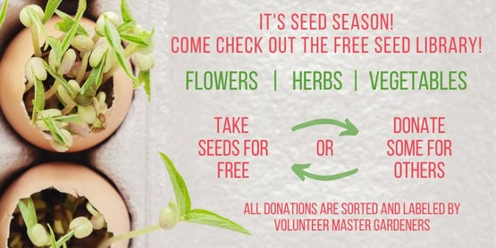 Seed Library Flyer