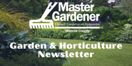 mg newsletter header