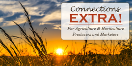 Connections Extra Banner