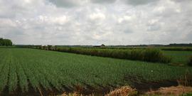 Field Crop Pest Mgmt