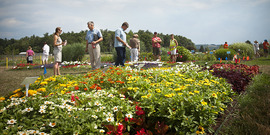 People viewing annual plant varieties at a floriculture field trial, Bluegrass lane, Cornell University