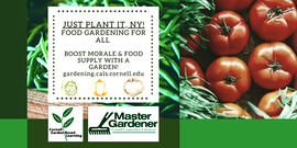 graphic including photo of green beans and tomatoes, and text stating: Just Plant It, NY! Food Gardening for all. Boost morale & Food supply with a garden! gardening.cals.cornell.edu, Cornell Gardening, Master Gardener program