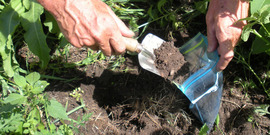 Garden soil is scooped into a plastic bag with a trowel.