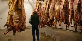 Meat hanging in the first cooler room of the processing facility. Freshly slaughtered animals are on the left, day-old animals on the right.