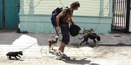 Katrina pet evacuation