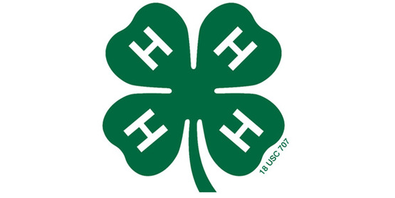 4 h clover small scale