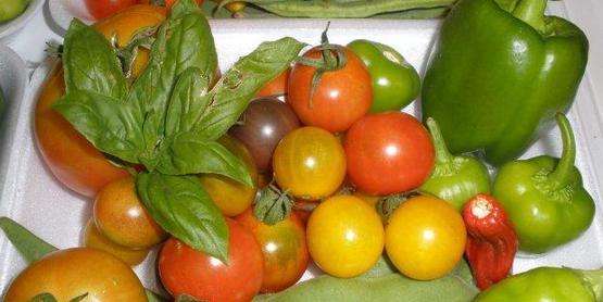 CCE-Schuyler Teaching Garden 2012, fresh picked vegetables
