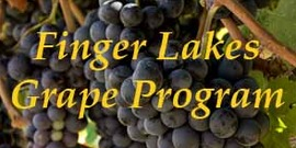 spotlight image for Finger Lakes Grape Program