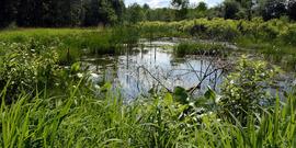 pond and vegetation