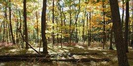 Woods yates