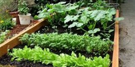 Vegetable Gardening for Success