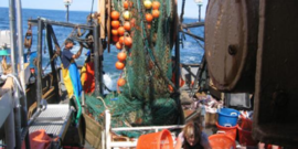 bycatch reduction 1
