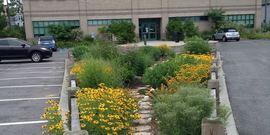 Rain Garden at 423 Griffing Avenue