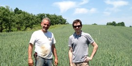 Walking amongst the wheat at Migliorelli's