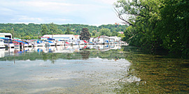 Hydrilla infestation in Cayuga Lake, photo taken from the Ithaca Farmers' Market side at Johnson's Boatyard toward Cornell, August 10, 2011