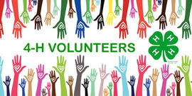 volunteer with 4h