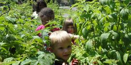 Garden Based Learning; children in a raspberry patch, picking fruit