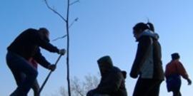 Savetheraintreeplantingtile