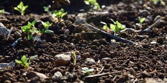 Soil sprouts sartori850x425