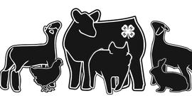 4-H Livestock Image