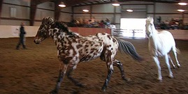 Horse Symposium