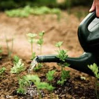 Otsego County Master Gardener Volunteer