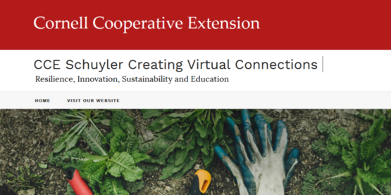 CCE Schuyler Creating Virtual Connections